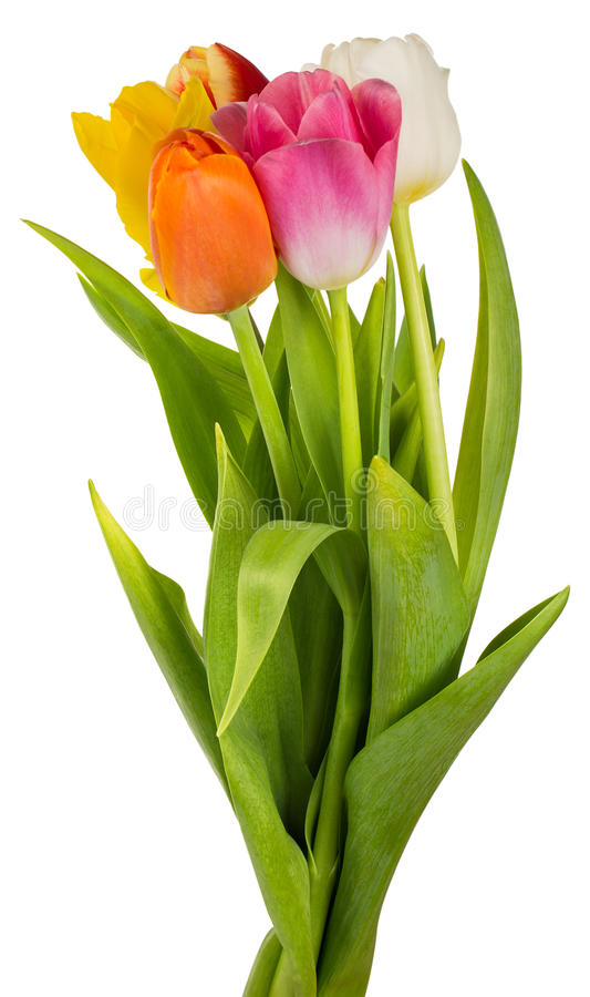 Five colorful tulips bouquet royalty free stock images