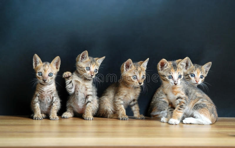 Five cute cats royalty free stock photography