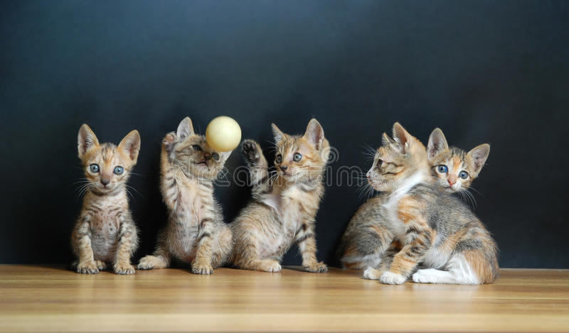 Five cute cats. With black background