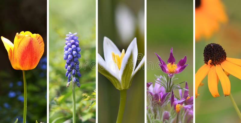 Spring flower collage stock photo