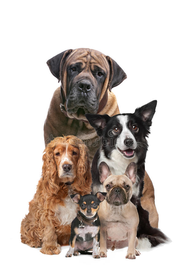 Five dogs. In front of a white background