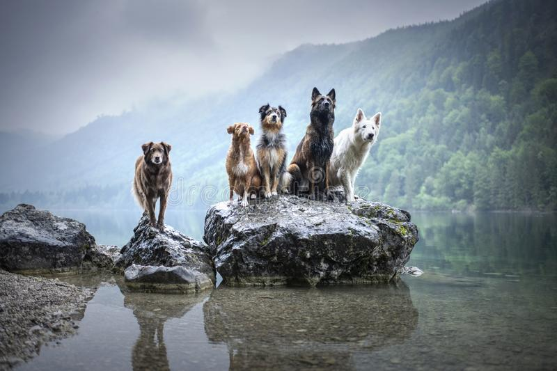 Five dogs are sitting on a rock in beautiful scenery. Friendship between dogs. Obedient dogs of different breeds. royalty free stock photography