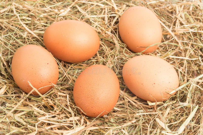 Download Five eggs nestled in straw stock image. Image of nestled - 29891283