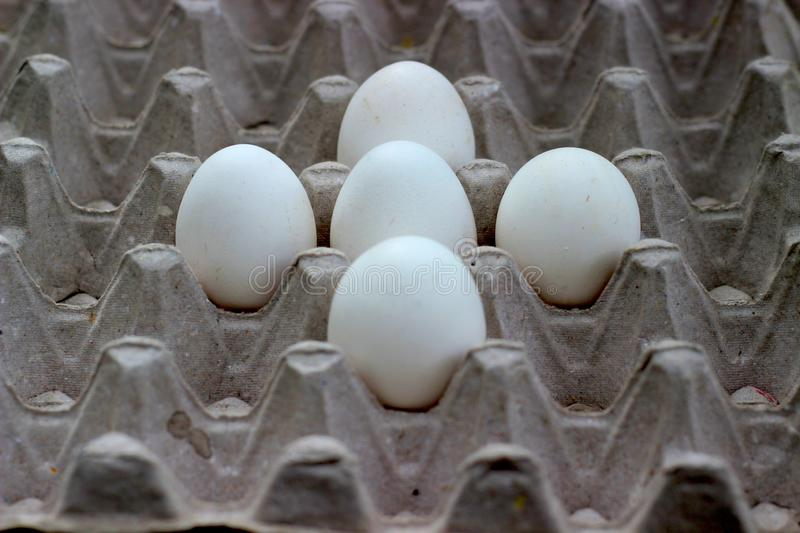 Five eggs are placed on a paper tray royalty free stock images