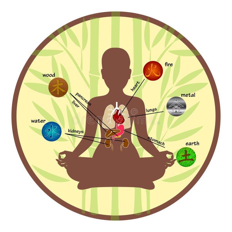 Five elements and human organs vector illustration