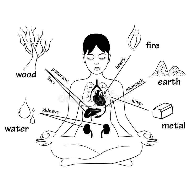 Five elements and human organs. Silhouette of sitting in meditation pose woman vector illustration