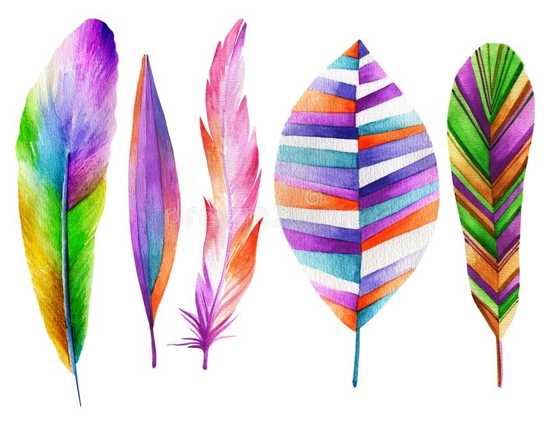 Set of feathers fabulous birds. Watercolor drawing royalty free illustration