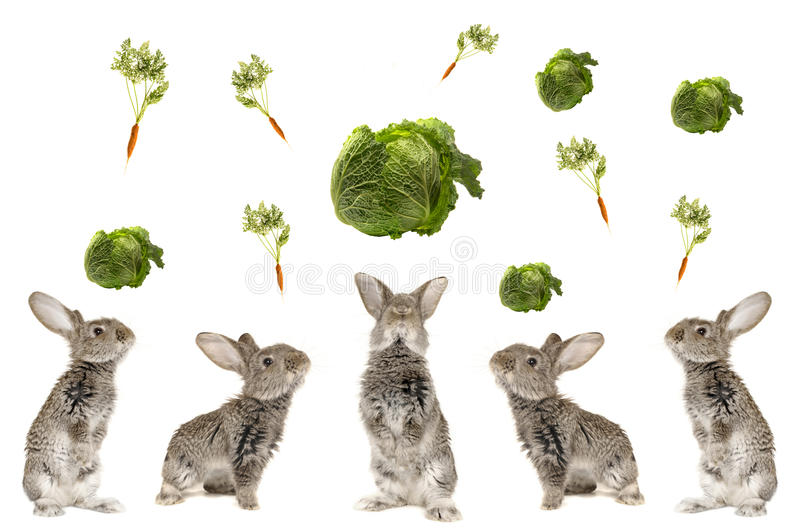 Five grey rabbit. On a white background stock photos