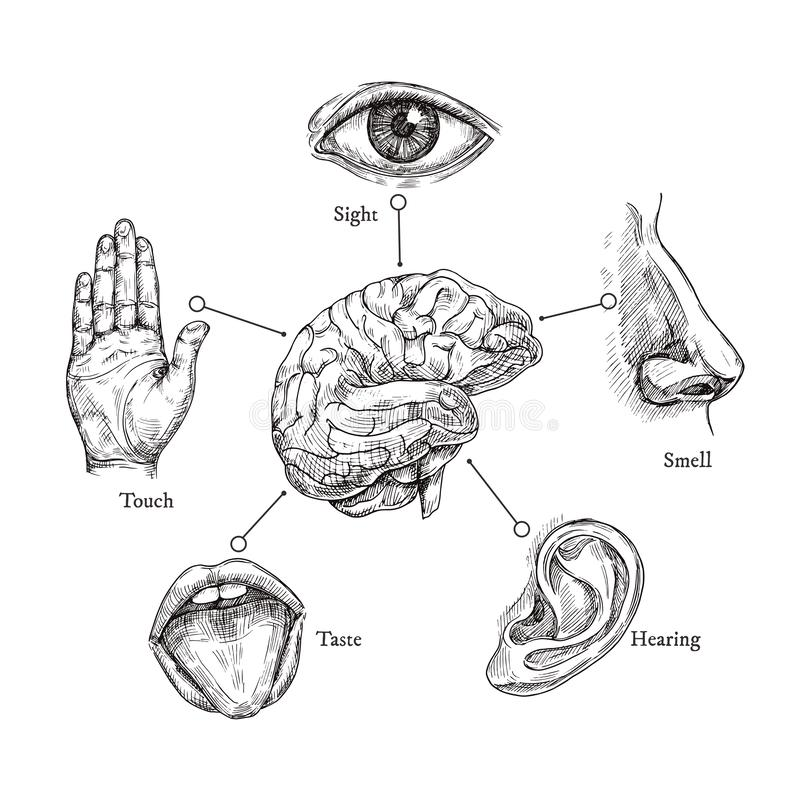 Five human senses. Sketch mouth and eye, nose and ear, hand and brain. Doodle body part vector set stock illustration