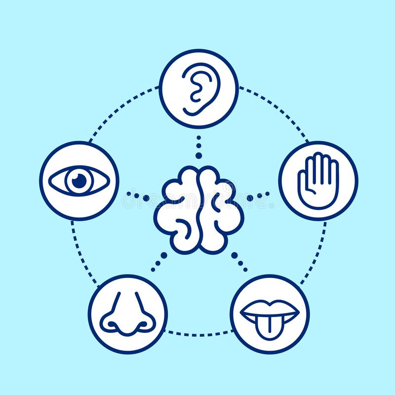 Five human senses surrounding brain. vector illustration