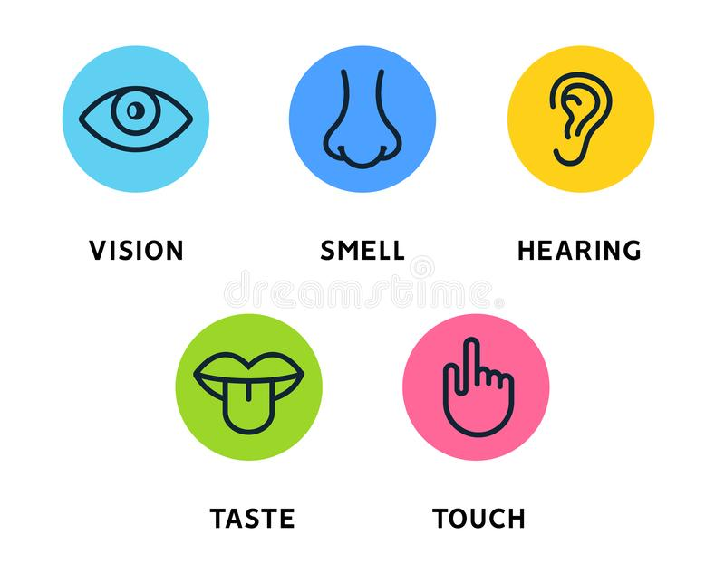 Five human senses vision eye, smell nose, hearing ear, touch hand, taste mouth and tongue. Line icons set vector illustration
