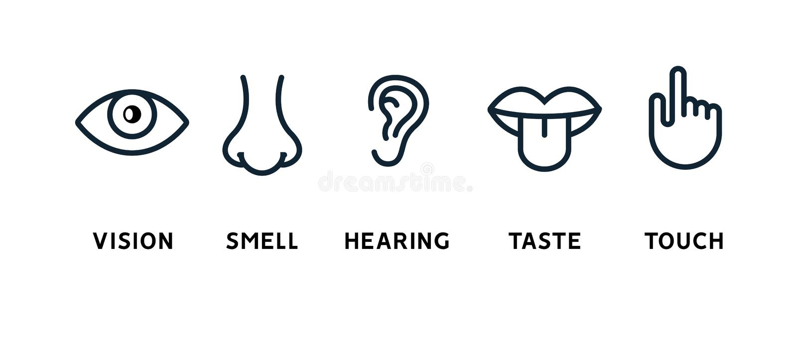 Five human senses vision eye, smell nose, hearing ear, touch hand, taste mouth and tongue. Line vector icons set royalty free illustration