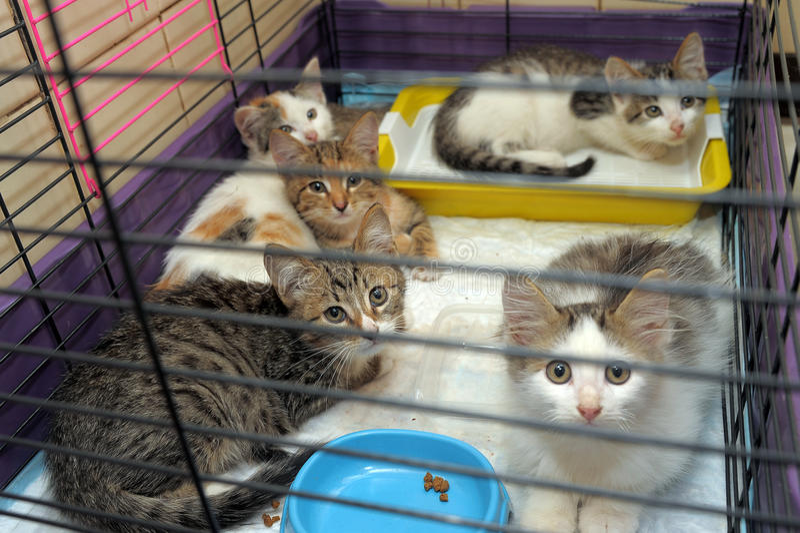 Five kittens stock photo