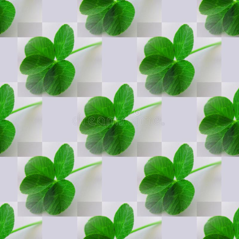 Five Leaf Clover Photo Green On Light Gray Stock Illustration