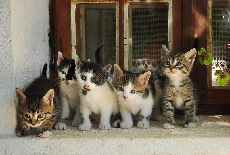 Five little cats stock photography