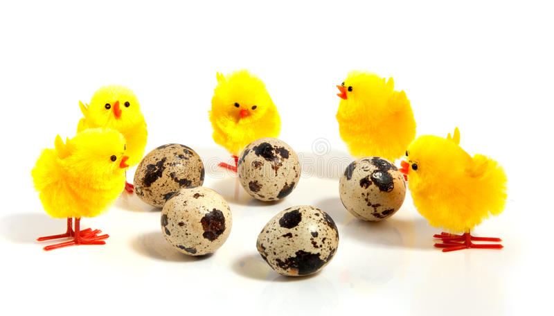 Download Five Little Yellow Chicks And Eggs Stock Photo - Image: 12795062