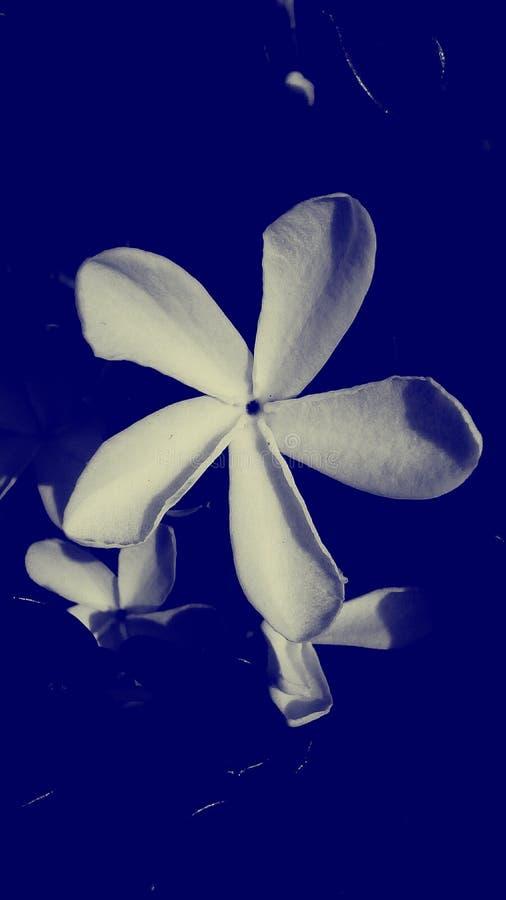 Five petals flower stock illustration