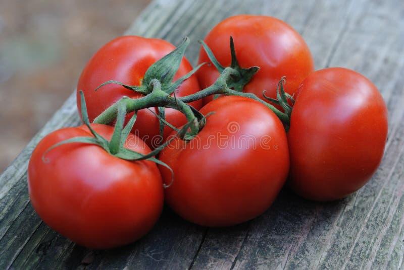 Five plump vine-ripened tomatoes stock photos