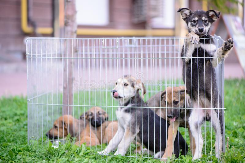Five puppies behind the fence outdoor. Pet portrait crossbred little five puppies behind the fence outdoor stock photography
