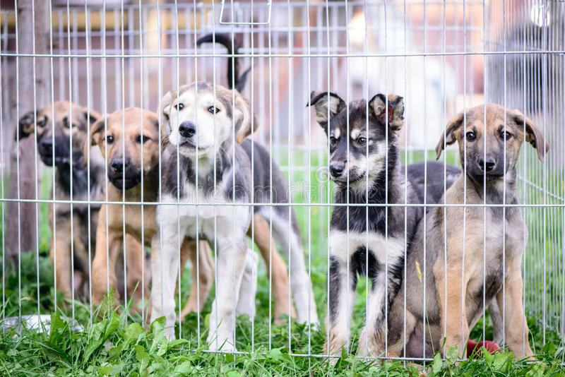 Five puppies behind the fence outdoor. Pet portrait crossbred little five puppies behind the fence outdoor royalty free stock photography