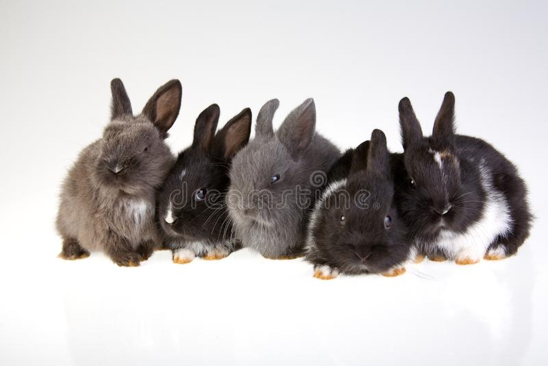 Five rabbit royalty free stock photography