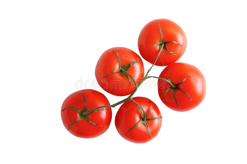 Five red tomatoes on branch. White isolate. View from above stock photos