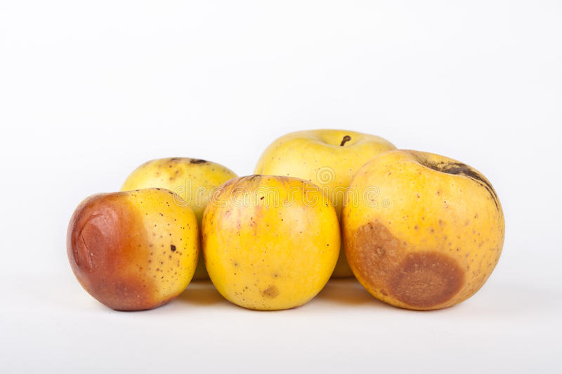 Five rotten yellow apples. On white background stock photo