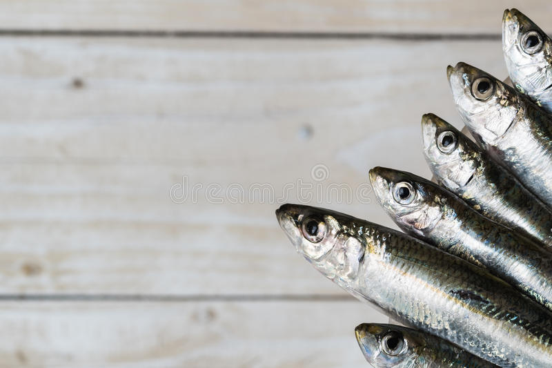 Five sardines stock photos