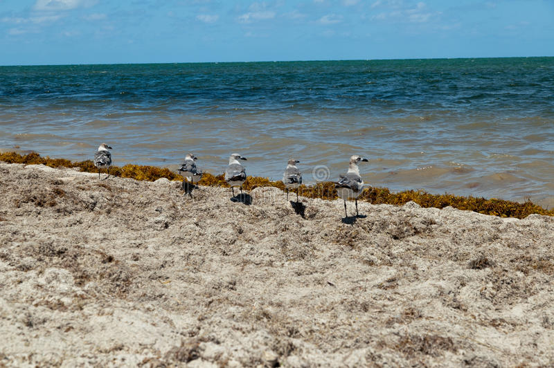 Download Five Seagulls at the beach stock photo. Image of holiday - 25440170