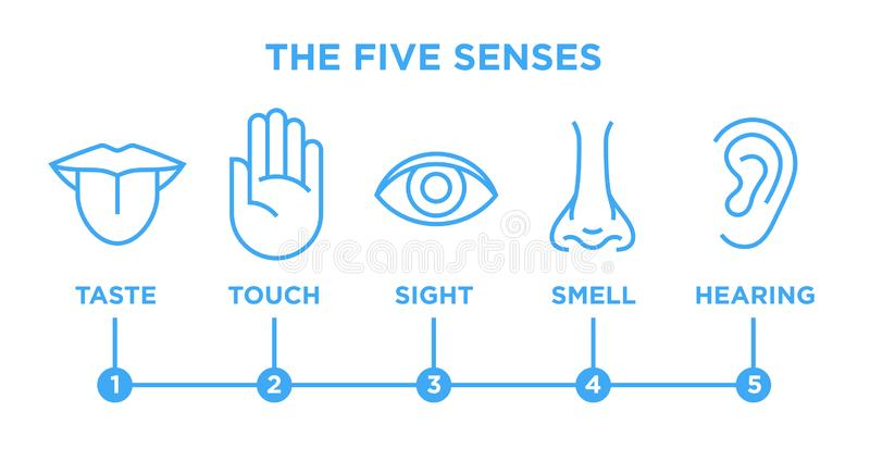 The five senses infographic vector line icons set stock illustration