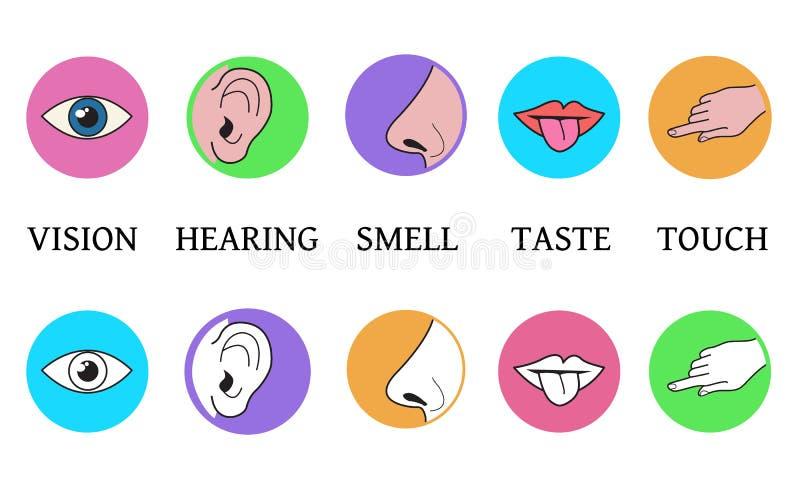 Five senses methods of perception, taste vision touch smell hea stock illustration