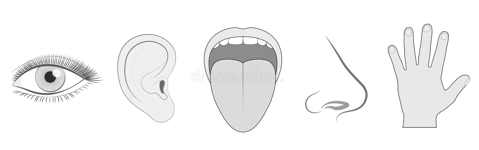 Five Senses Sight Hearing Taste Smell Touch. Five senses - sight, hearing, taste, smell and touch - schematic isolated vector icon illustration set of eye, ear royalty free illustration