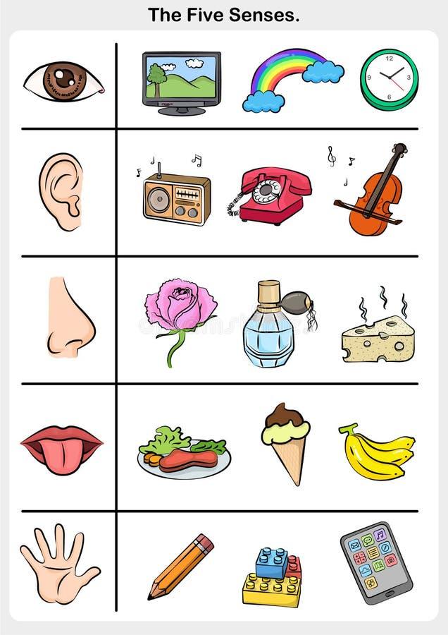 Five senses - touch, taste, hearing, sight, smell. Worksheet for education vector illustration