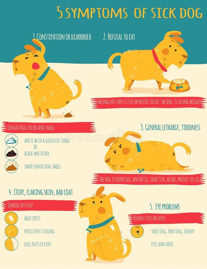 Five simptoms of sick dog. Infographics vector illustration