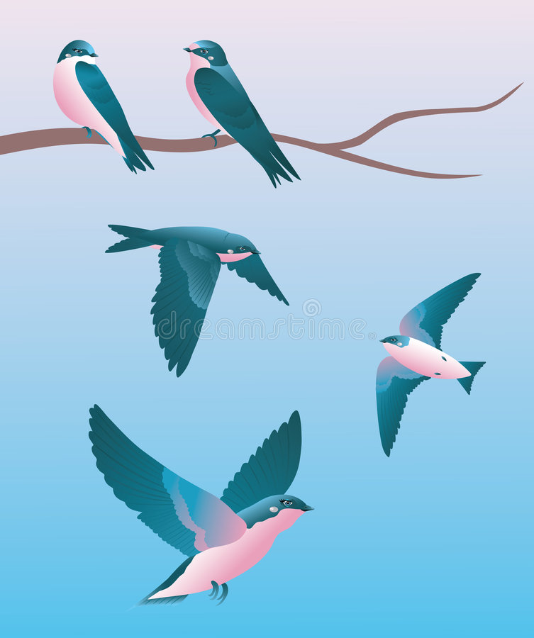 Five Swallows. Stock Image