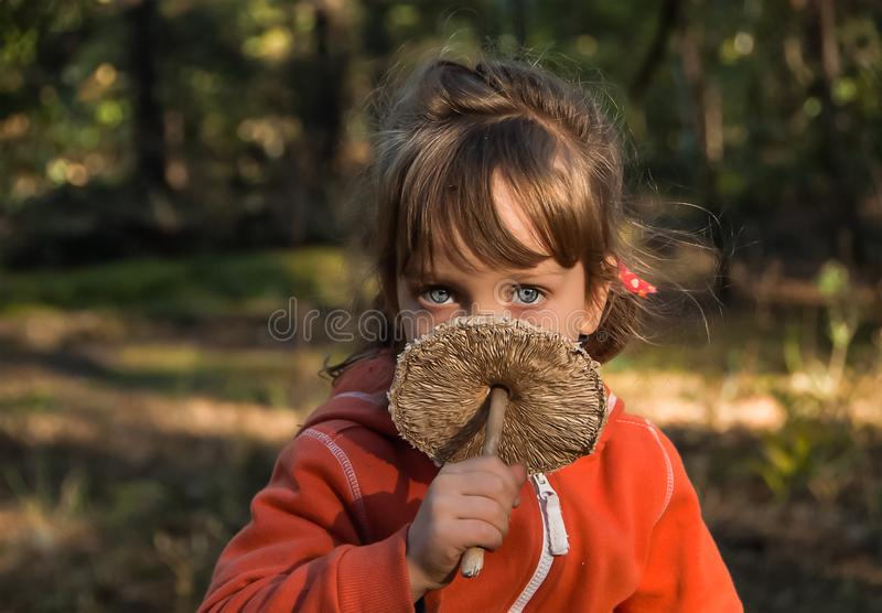 Five-years-old girl with beautiful blue eyes holds parasol mushroom in her hand. Nice child is in autumn forest royalty free stock images