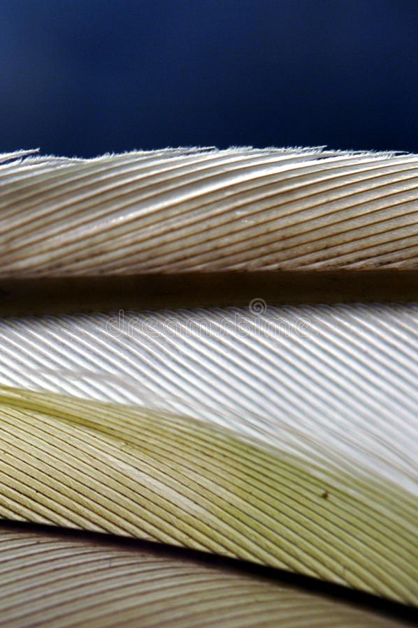 Fjäder arkivfoto