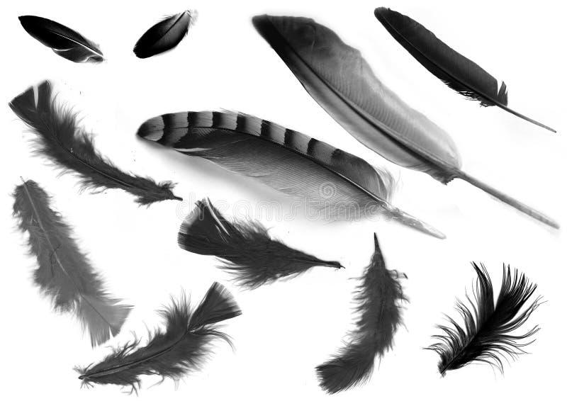 fjäder arkivfoton