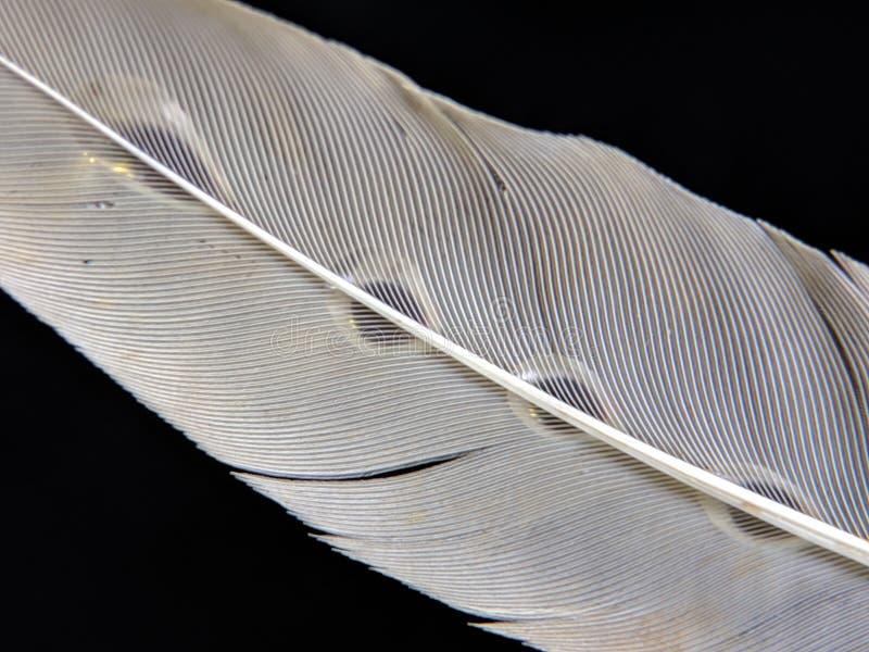 Fjäder av en fågel i små droppar av vatten på en mörk bakgrund royaltyfria bilder