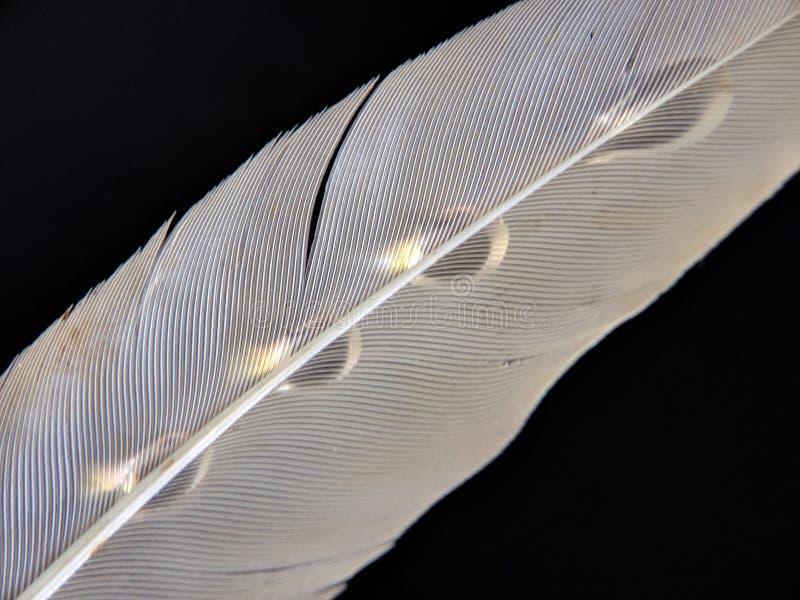 Fjäder av en fågel i små droppar av vatten på en mörk bakgrund royaltyfri bild