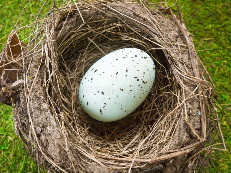 fjäder för ägghäroldrobin s royaltyfri foto