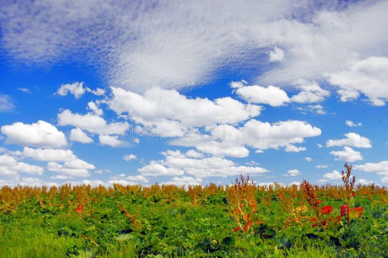 fjäder för blå sky royaltyfria bilder
