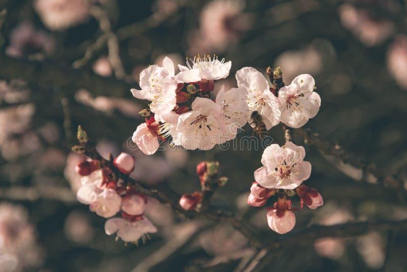 fjäder för 3 blommor fotografering för bildbyråer