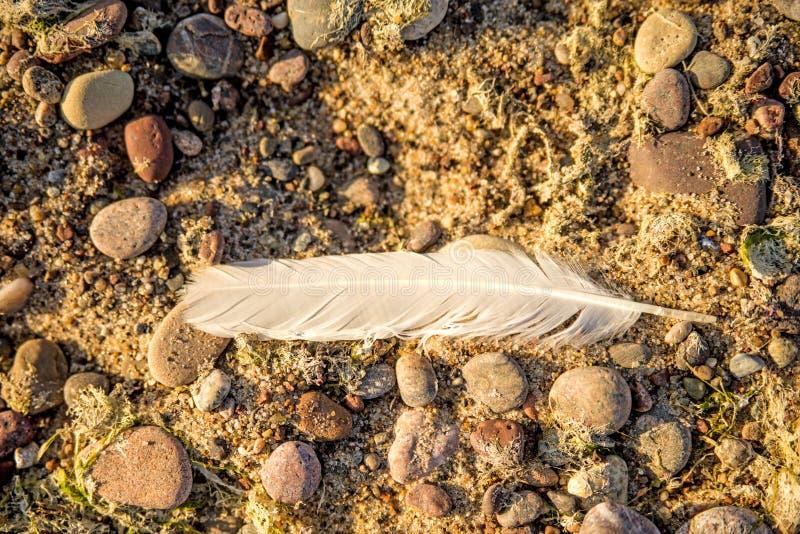 Fjäder på en strand arkivfoton