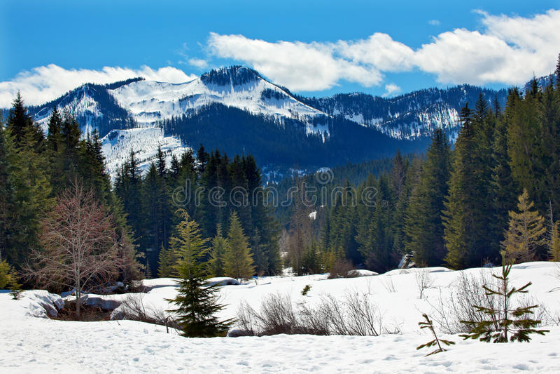 fjäder washington för snow för montering för liten vikguldhyak royaltyfria bilder