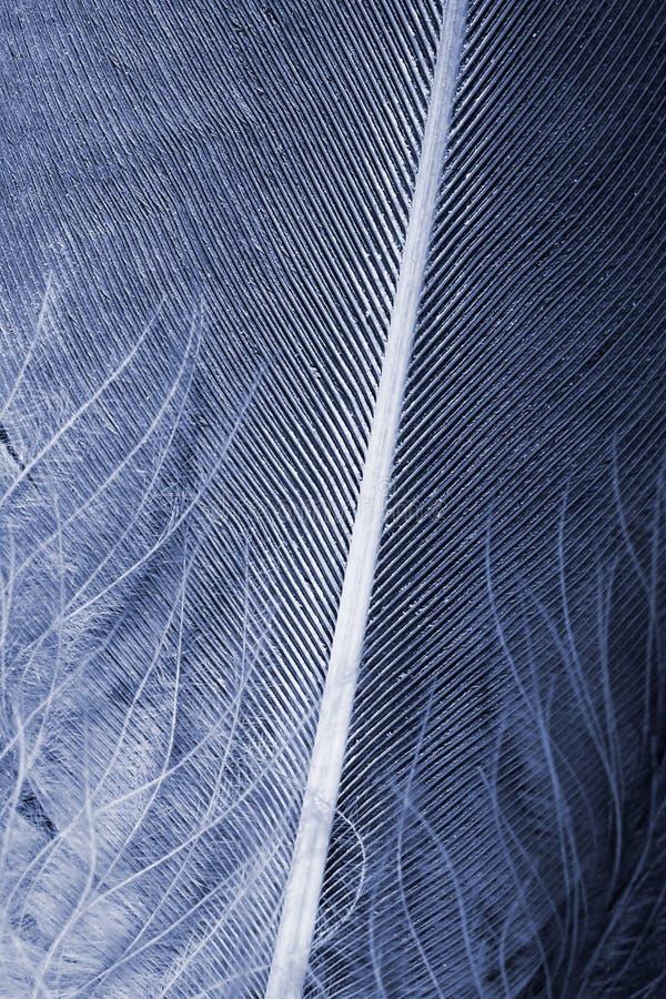 Download Fjäderbakgrund arkivfoto. Bild av ostrich, härlig, färg - 37348634