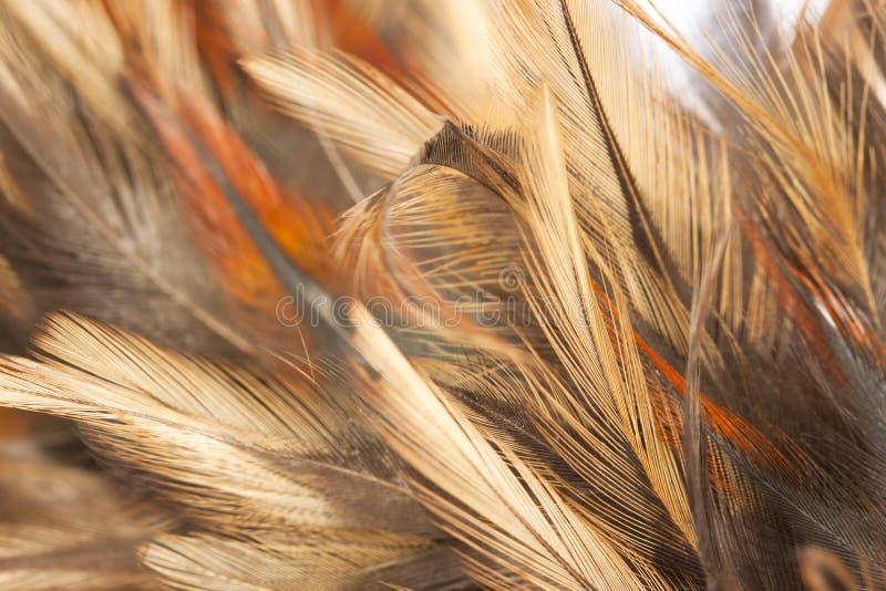 Fjäderbakgrund fotografering för bildbyråer
