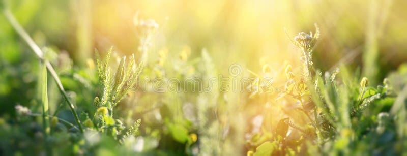 Fjädergräs tidigt på våren, färska gröna gräs i ängsmark arkivfoton