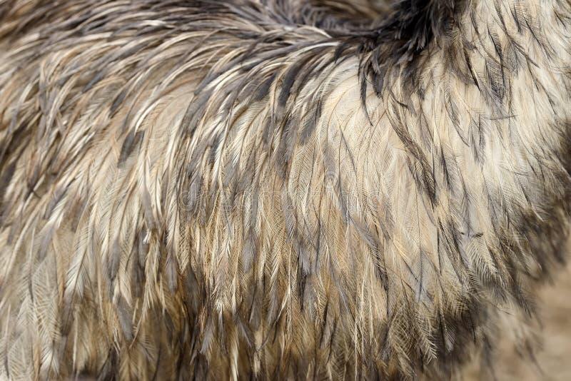 Fjädertextur av en struts royaltyfri bild