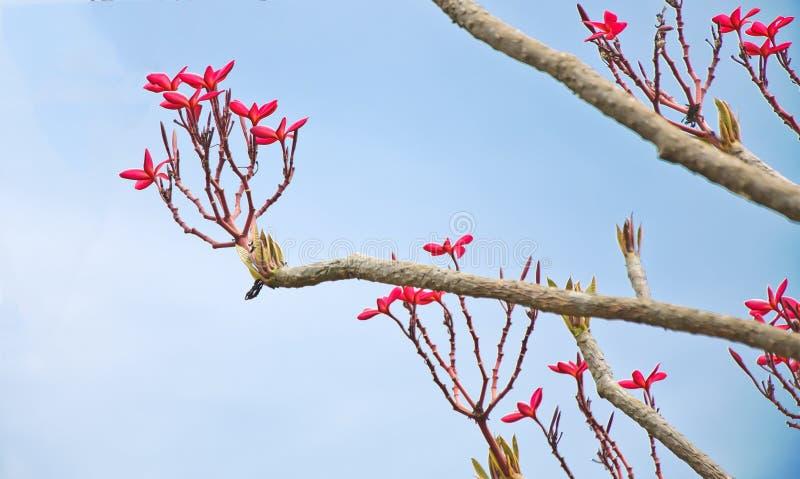 Fjädertitelrad med den rosa blomman arkivbild